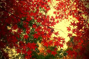 紅葉その1