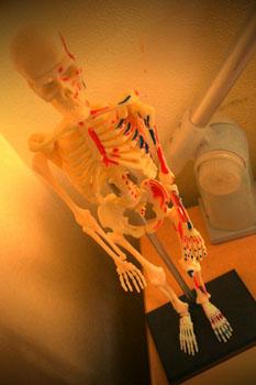 卓上骨格標本。