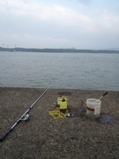 釣り場はこんな感じ
